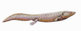 Dvinosauria Suborder of prehistoric amphibians
