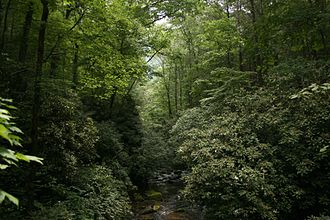 Chattooga River - Headwaters of the East Fork