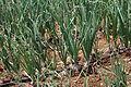 Eau-irrigation (25).JPG