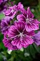Eden Flowers (115327707).jpeg