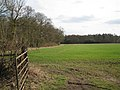 Edge of a wood, Haseley - geograph.org.uk - 1765570.jpg