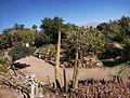 Eilat Botanical garden 10.jpg