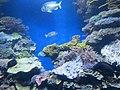 Eilat Coral World Underwater Observatory 24.jpg