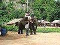 Elephant - panoramio.jpg