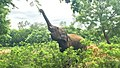 Elephant in India.jpg