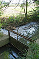 Erlenbach-Abzweig Mühlkanal Haldenhof.jpg