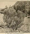 Ethnobotany of the Tewa Indians (1916) (14595493447).jpg
