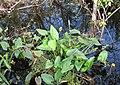 Everglades R06.jpg