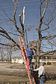 FEMA - 40081 - Volunteer in a tree in Kentucky.jpg