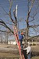 FEMA - 40081 - Volunteer in a tree in Kentucky.jpg