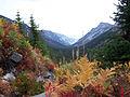 Fall Ferns (5558965241).jpg
