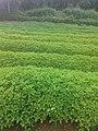 Farms in kerala.jpg