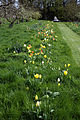 Feeringbury Manor grass path with tulip verge, Feering Essex England.jpg