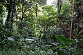 Feifengshan Trail 飛鳳山步道 - panoramio.jpg