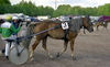 Finnhorse Nr. 3 being warmed up before a race.png