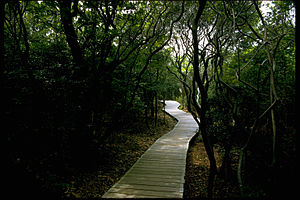 Fire Island National Seashore FIIS3145.jpg