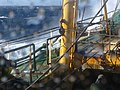 Fish aboard trawler African Queen 4.jpg