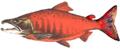 Fish stub(Sockeye).png