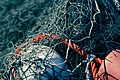 Fishing Nets - Peggys Cove (23731786406).jpg