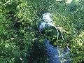 Fivehead River - and lush vegetation - geograph.org.uk - 450044.jpg