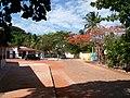Flamboyant - panoramio.jpg