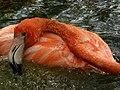 Flamingo (3514658688).jpg
