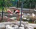 Flamingoes Group.jpg