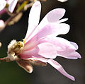 Flickr - Michael Gwyther-Jones - Spring (6).jpg