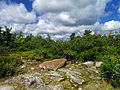 Flickr - Nicholas T - Mountaintop Barrens.jpg