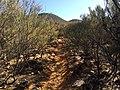 Flinders Ranges SA 5434, Australia - panoramio (156).jpg