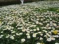 Flora vo Polog lete (5).JPG