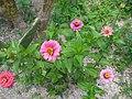 Flores silvestres - panoramio.jpg