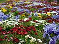 Flores sin fin I.jpg