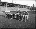 Football team at the University of Washington, ca 1916 (MOHAI 5166).jpg