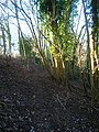 Footpath, Malling Down Nature Reserve - geograph.org.uk - 292079.jpg