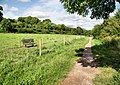Footpath by the River Stour - geograph.org.uk - 1438159.jpg