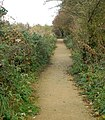 Footpath north to Ufton from the nature reserve - geograph.org.uk - 1550555.jpg