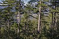 Forêt domaniale des Avant-Monts 06.jpg