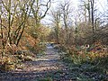 Forest Track - geograph.org.uk - 1095416.jpg