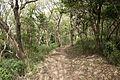 Forest in Mt.Hokyo 01.jpg