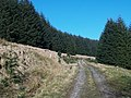 Forestry road, Errickstane Hill - geograph.org.uk - 686366.jpg