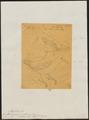 Formicarius myiotherinus - 1854 - Print - Iconographia Zoologica - Special Collections University of Amsterdam - UBA01 IZ16400323.tif