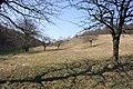 Frühlingsrundwanderung Schmücke bei Heldrungen Süßkirschenstreuobsthänge - panoramio.jpg