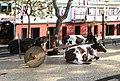 Funchal vintage celebration Madeira 2016 1.jpg