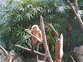Funny monkey.jpg