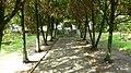 Głaz pamiątkowy z tablicą umieszczony na schodkowym podeście. W mogile spoczywają szczątki 369 ofiar terroru hitlerowskiego z Nakła i okolic zamordowanych przez Selbstschutz i niemiecką żandarmerię wojs - panoramio (1).jpg