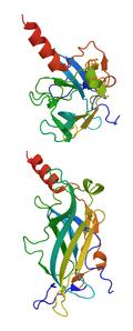 ATP-sensitiver einwärts-gleichrichtender Kaliumkanal