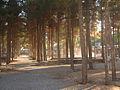 Garden of Pine - West of Omar Khayyam Tomb - Nishapur 01.JPG