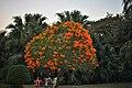 Garden view of Saheliyon-ki-Bari, Udaipur.jpg