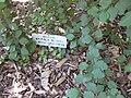 Gardenology.org-IMG 0337 rbgs10dec.jpg
